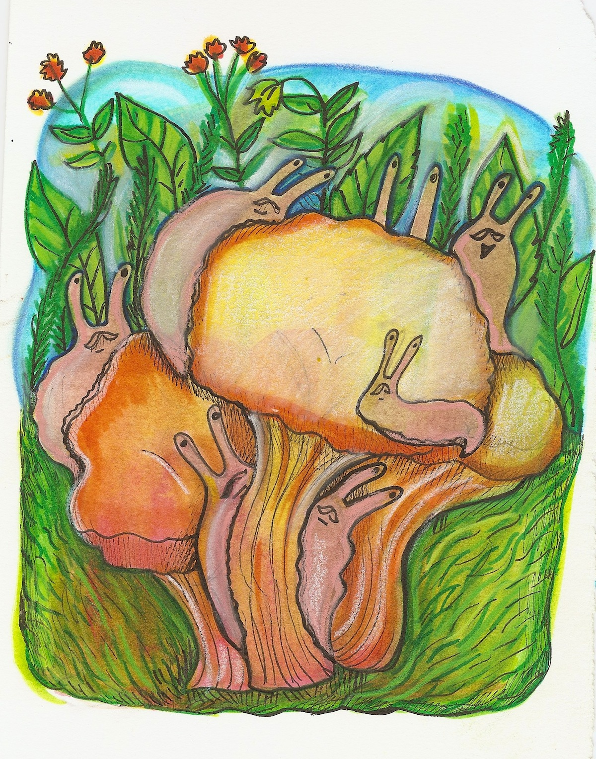 slugs dont eat the chantrelles